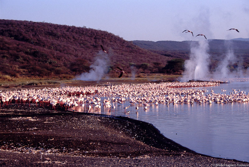 Lake Bogoria Flamingoes